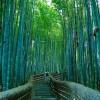 Para los amantes de la naturaleza el bosque de bambhellip